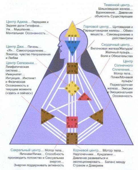 Дизайн человека хьюман